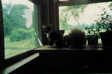 Kitten Zoe on our farm in Kimberton, PA