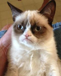 Original Grumpy Cat photo that swept the world up in a fit of crabbiness!