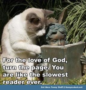 Funny-Cat-Reading