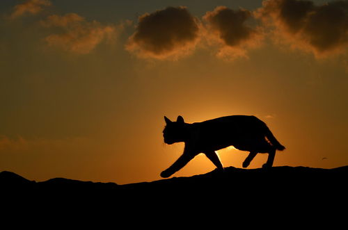 Cat at sunset by Serkan Sarikef