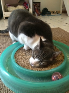 Locket also has a playful side!